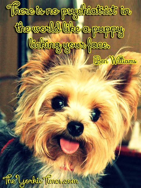 yorkie quotes yorkie quotes and sayings quotesgram