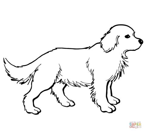 Golden Retriever Coloring Page printable golden retriever coloring pages cooloring