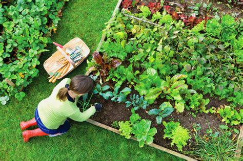 Hierbas aromáticas: ¿Cómo diseñar un jardín con ellas?