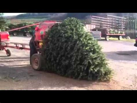 christmas tree bailer tree vs bailer