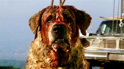 cujo breed our favorite pop culture dogs for every breed nerdist