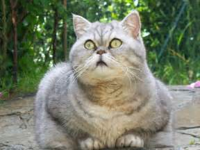 fat cat giuly is a new internet sensation damn cool pictures