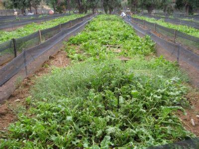 allevamento lumache in casa allevamento di lumache da gastronomia e riproduzione