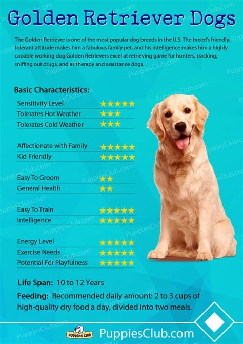 characteristics of golden retriever golden retriever characteristics assistedlivingcares