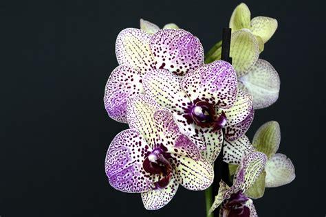 gambar alam mekar menanam ungu daun bunga