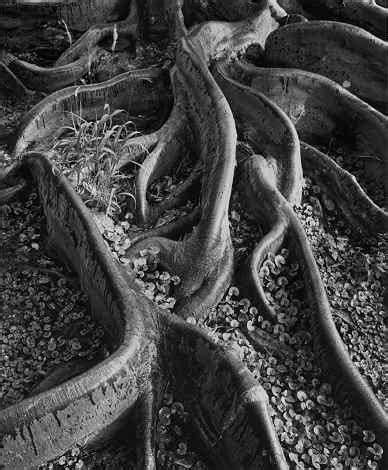 ansel adams and clyde butcher