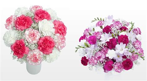facts about carnations interesting facts about carnations flower gift ideas