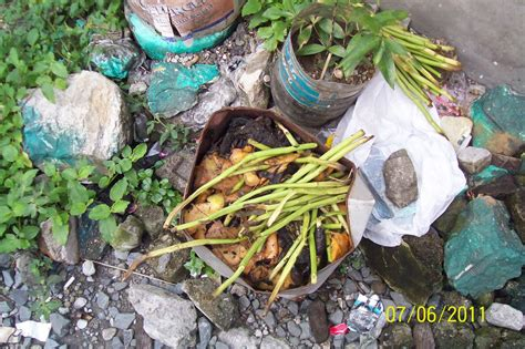Kitchen Bin Ideas by Gogreen Reducing Biodegradable Waste