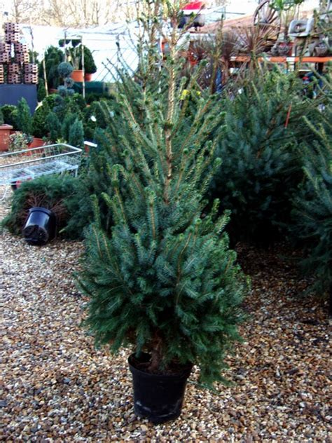 28 best artificial christmas tree smells musty get the