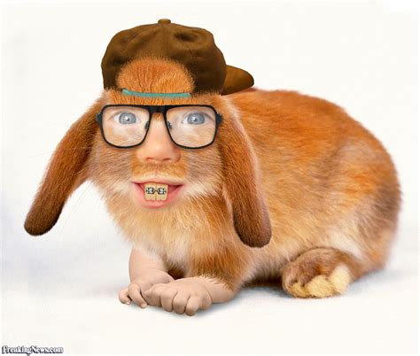 with glasses rabbit with glasses pictures freaking news