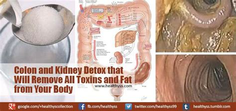 Do Detox Diets Remove Toxins From The by 46 Best Window Decorating Images On Window