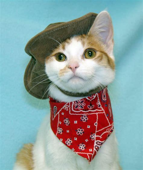 Garage Designs Free cat cowboy kitty portrait cc 5 6 7 8 dancing my way