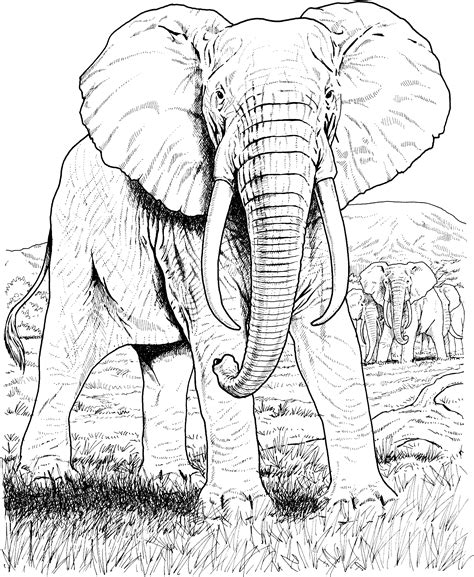 stress relief coloring pages elephant elephant mandala coloring pages adult color pages stress