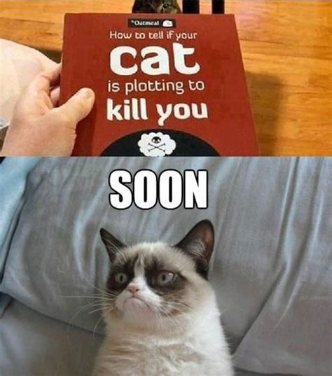 Meme Cat Generator - best 25 cat meme generator ideas on pinterest grumpy
