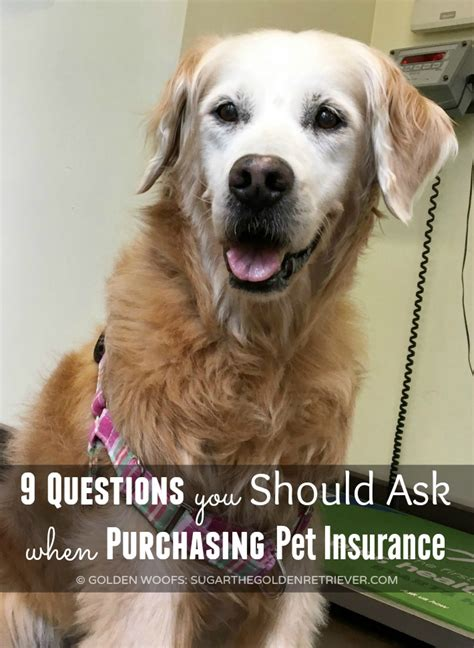 questions to ask when buying a golden retriever puppy questions to ask when getting a golden retriever merry photo
