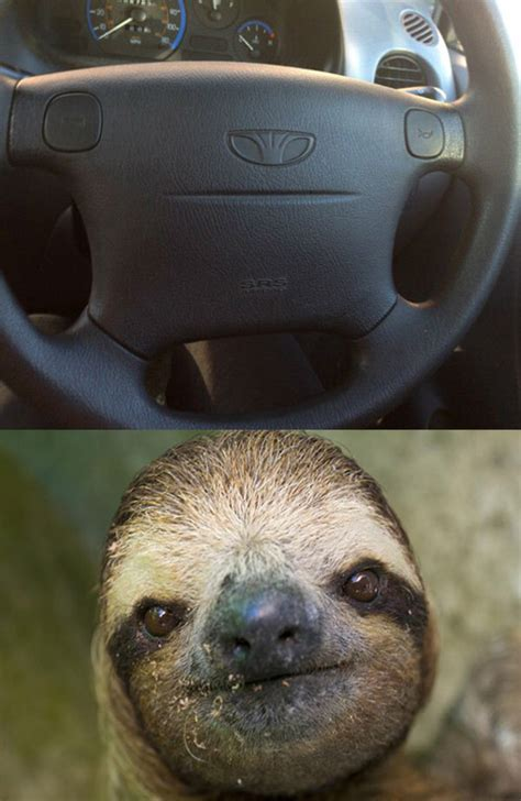 sloth lookalike   day  poke