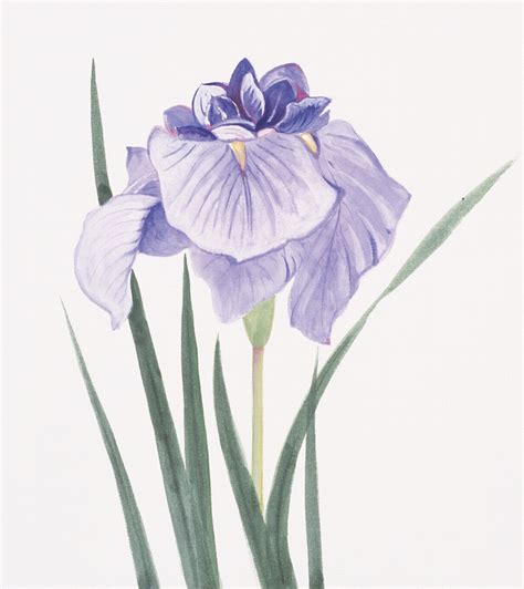 you gotta see these amazingly realistic iris flower tattoo