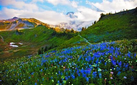 landscape spring meadow flowers wallpaper hd  wallpaperscom