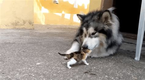 puppy scared of me big dogs scared of tiny animals but mostly cats craveonline