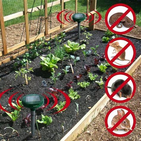 come liberarsi dalle talpe in giardino come liberarsi dalle talpe