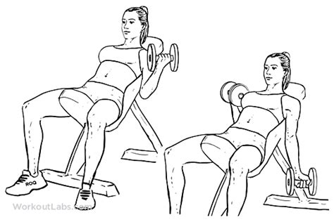 dumbbell bicep curl incline bench seated alternating incline bench dumbbell curls workoutlabs