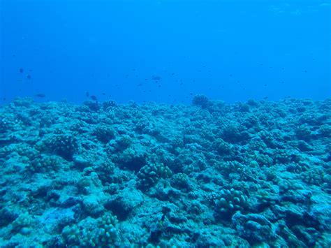 Rogo Tumu Life   South Pacific Jaclynxmoana