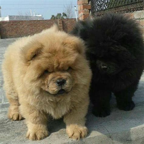 where can i go to play with puppies 65 puppy pictures to brighten your day
