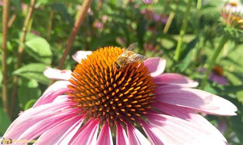 fiori baldo in trentino in estate il monte baldo e l altipiano di