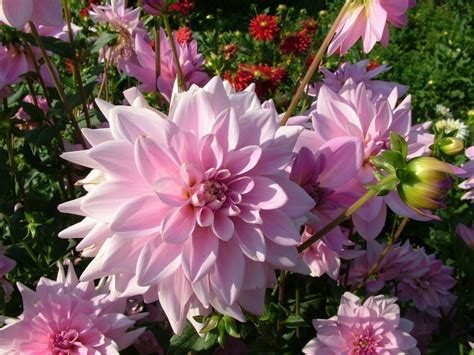 beautiful flowers wallpapers latest news new and latest natural desktop wallpapers 2011 2012 the