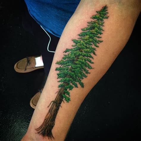 redwood tree tattoo redwood tree tattoos pictures to pin on tattooskid