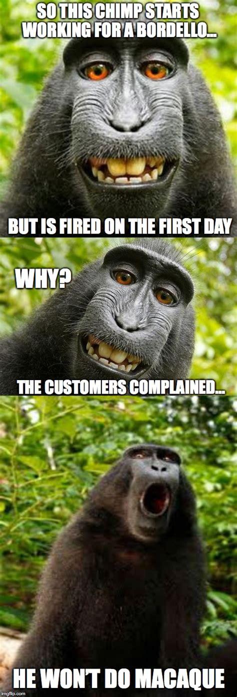 Chimp Meme - bad pun monkey imgflip