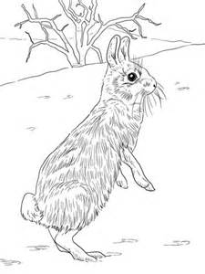 cottontail rabbit coloring page 301 moved permanently
