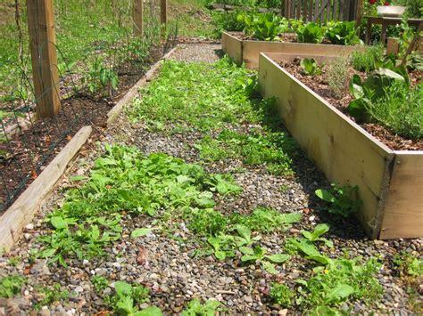 backyard weeds got weeds use vinegar not roundup