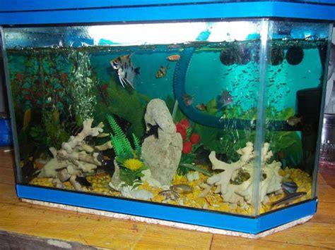 membuat filter aquarium laut membuat filter aquarium sendiri tanpa kuras air selamanya