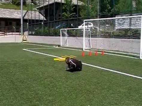 allenamenti portiere allenamenti portiere calcio 25 esercitazioni