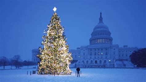 new year tree photo new year tree outside the white house wallpapers and