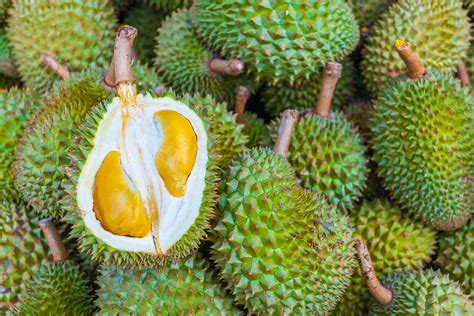 6 fruits in 6 southeast asian fruits to
