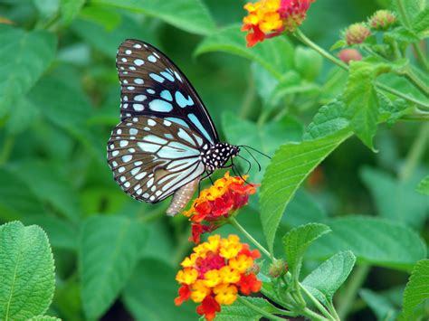 the butterfly beautiful butterfly wallpapers