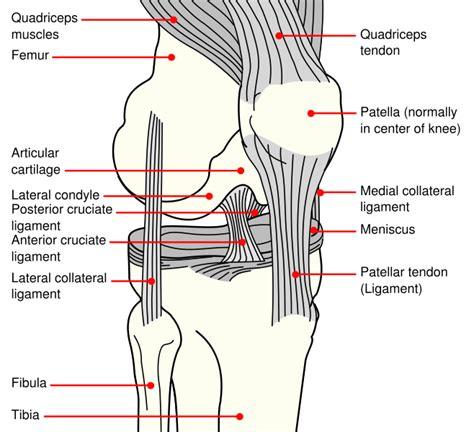 knee diagram human knee diagram