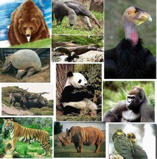 imagenes de animales utiles vamos a cuidar nuestra fauna blog extincion