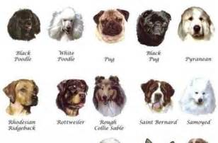 tag for small dog breeds with pictures and names more
