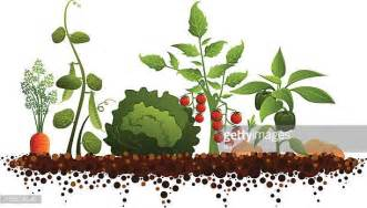illustrations et dessins anim 233 s de jardin potager getty