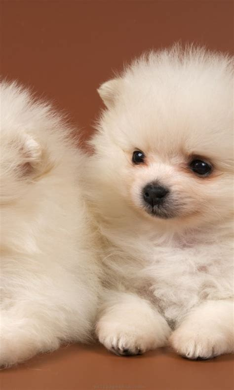 49 Cute Dog Wallpapers Top Ranked Cute Dog Wallpapers Pc Lkz484   49 cute dog wallpapers top ranked cute dog wallpapers