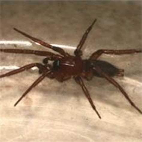 Keep Spiders Out Of Shed by 1000 Ideas About Outdoor Storage On Outdoor
