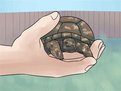 vasca per tartaruga vasca per tartarughe d acqua con come costruire terrario