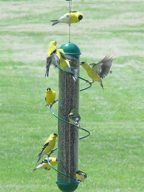 songbird essentials 17 quot green spiral finch tube bird feeder