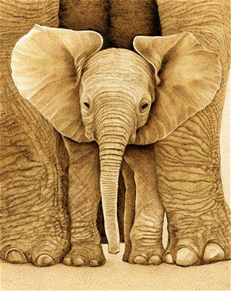 baby elephant drawing by cate mccauley