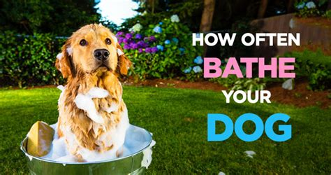 how often should a puppy how often should i bathe my a guide to wash your