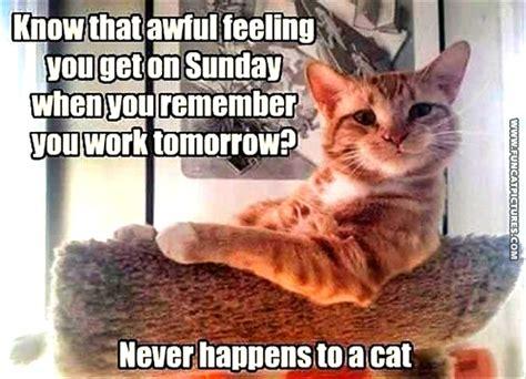A Cat On A Sunday ten cats comic september 13 2015 on gocomics