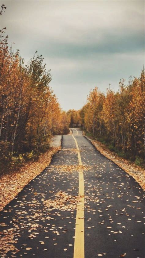 fall background ideas  pinterest phone